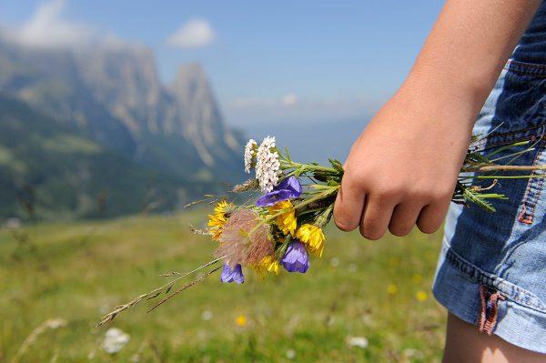 Blumenmeer in den Dolomiten