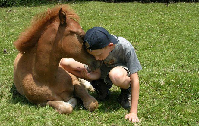 pferde-bauernhof