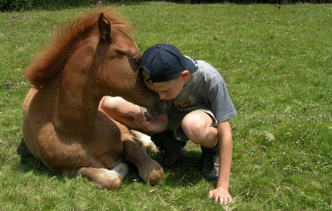 Pferde zum anfassen